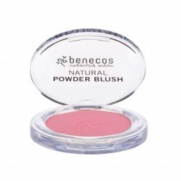 Blush mallow rose